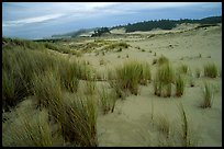 Sand Dunes near Florence. Oregon, USA ( color)