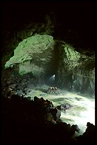 Sea Lion cave. Oregon, USA