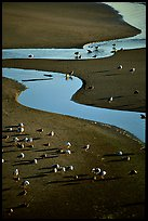 Seabirds and stream on beach. Oregon, USA ( color)