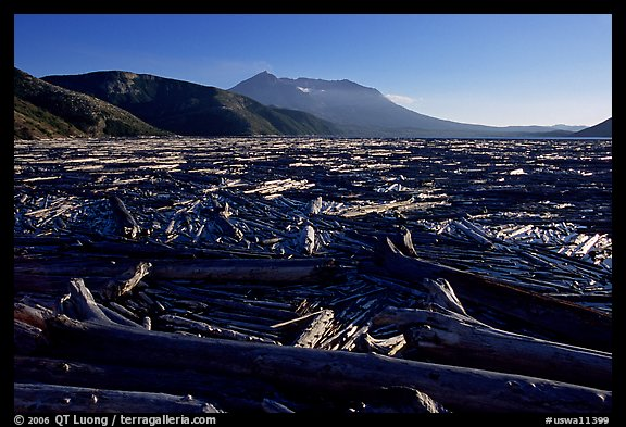 Knocked tree trunks cover Spirit Lake. Mount St Helens National Volcanic Monument, Washington