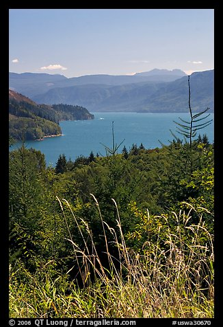 Summer grasses and Riffe Lake. Washington (color)