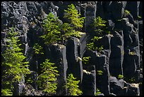 Young pine trees growing on columns of basalt, Lava Canyon. Mount St Helens National Volcanic Monument, Washington (color)