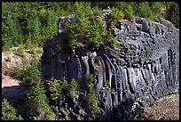 Massive bloc of basalt with young trees growing on top. Mount St Helens National Volcanic Monument, Washington