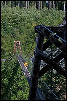 Suspension bridge over Lava Canyon. Mount St Helens National Volcanic Monument, Washington ( color)