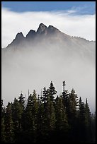 Spruce and mountain above fog. Washington ( color)