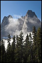 Spruce, fog, and Liberty Bell Mountain. Washington ( color)
