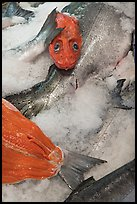 Fresh salmon for sale, Pike Place Market. Seattle, Washington (color)