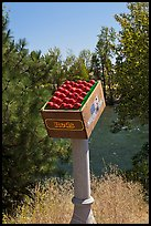 Sculpture of red apples box, Cashmere. Washington ( color)