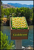 Sculpture of yellow apples box, Cashmere. Washington ( color)