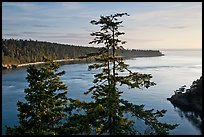 Deception Bay, Whidbey Island. Olympic Peninsula, Washington ( color)