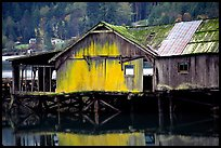 Old wooden pier, Olympic Peninsula. Olympic Peninsula, Washington ( color)