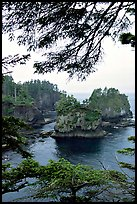 Sea cliffs, Cape Flattery, Olympic Peninsula. Olympic Peninsula, Washington (color)