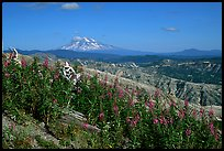 View over Cascade range with Snowy volcano. Mount St Helens National Volcanic Monument, Washington