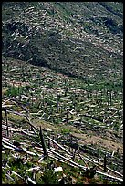 Forests flattened by the eruption lie pointing away from the blast. Mount St Helens National Volcanic Monument, Washington ( color)