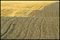 Undulating field with plowing patterns, The Palouse. Washington ( color)
