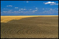 Field with curved plowing patterns, The Palouse. Washington (color)