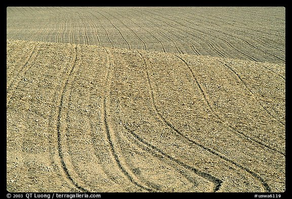 Field with curved plowing lines, The Palouse. Washington (color)