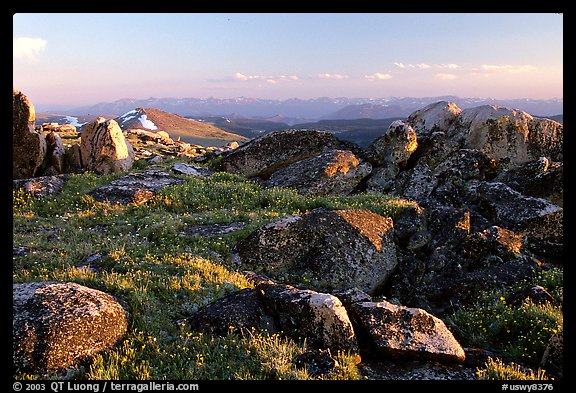 Wildflowers and rocky alpine meadow, late afternoon, Beartooth Mountains, Shoshone National Forest. Wyoming, USA (color)