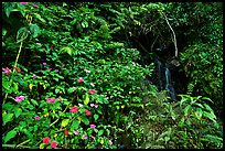 Pictures of Puerto Rico Forests