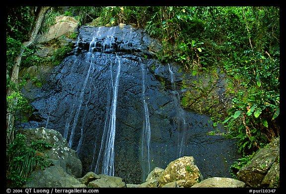 Coca falls el yunque carribean national forest puerto rico color