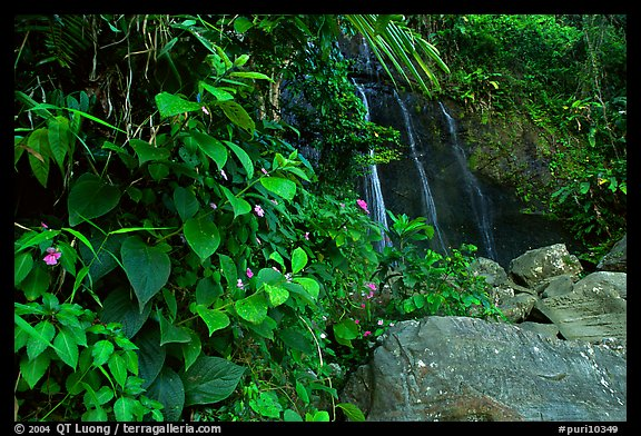 Waterfall in rain forest, El Yunque, Carribean National Forest. Puerto Rico (color)
