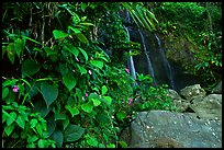 Waterfall in rain forest, El Yunque, Carribean National Forest. Puerto Rico
