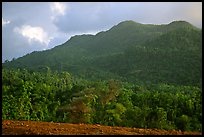 Forest-covered hill. Puerto Rico ( color)