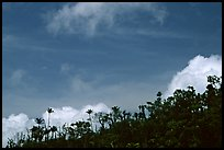 Clouds and trees. Puerto Rico ( color)