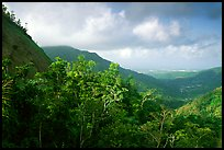 Tropical forest and hills. Puerto Rico (color)
