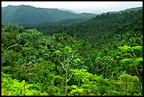 Tropical forest on hillsides. Puerto Rico ( color)