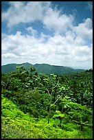 Hills covered with tropical forest. Puerto Rico ( color)
