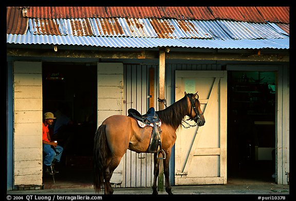 Man sitting inside a bar with a horse parked outside, North East coast. Puerto Rico (color)