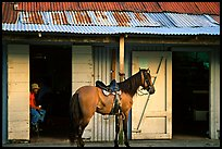 Man sitting inside a bar with a horse parked outside, North East coast. Puerto Rico