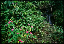 Flowers, lush foliage, and waterfall in rain forest, El Yunque, Carribean National Forest. Puerto Rico