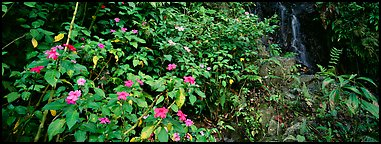 Tropical forest scenery with flowers and waterfall. Puerto Rico (Panoramic color)