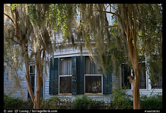 Spanish moss covered trees and windows. Selma, Alabama, USA
