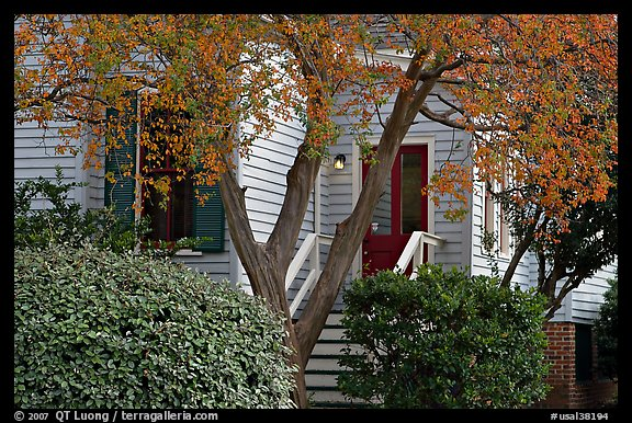 Tree in fall color and house. Montgomery, Alabama, USA (color)