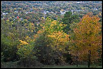 Trees in fall colors and city. Hot Springs, Arkansas, USA