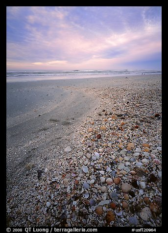 Beach covered with sea shells, sunrise. USA (color)