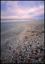 Beach covered with sea shells, sunrise. USA ( color)