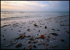 Shells and seaweeds freshly deposited on beach, Sanibel Island. Sanibel Island, Florida, USA (color)