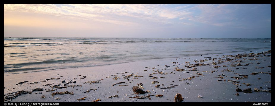 Beach seascape with washed seaweed, Sanibel Island. Florida, USA (color)
