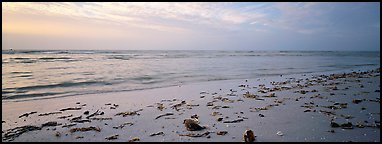 Beach seascape with washed seaweed. Sanibel Island, Florida, USA (Panoramic color)