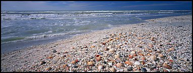 Shell-covered beach, Sanibel Island. Florida, USA (Panoramic color)
