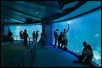 Aquarium, Walt Disney World. Orlando, Florida, USA (color)