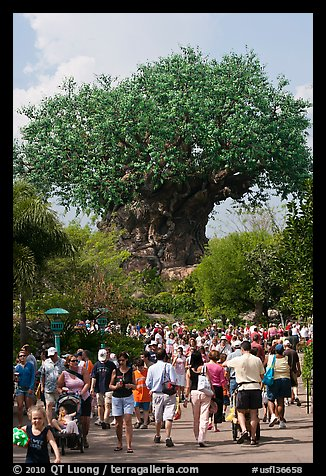 The Tree of Life, centerpiece of Animal Kingdom Theme Park. Orlando, Florida, USA (color)