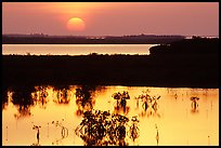 Sunset on mangroves. The Keys, Florida, USA (color)