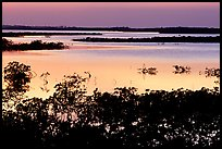 Mangroves after sunset. The Keys, Florida, USA