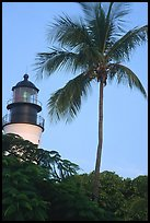 Lighthouse and palm tree. Key West, Florida, USA (color)