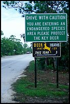 Sign warning about the endangered Key deer, Big Pine Key. The Keys, Florida, USA (color)